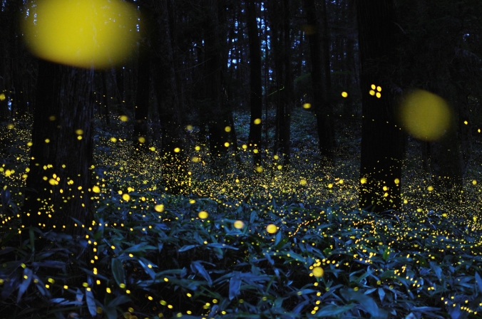 FirefliesNightSky
